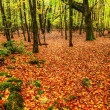 Stunning bright Autumn Fall forest landscape vibrant colors — Stock Photo