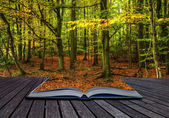 Vibrant Autumn Fall forest landscape coming out of magic book — Stock Photo