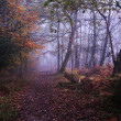 Path through foggy misty Autumn forest landscape at dawn — Stock Photo