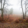 Foggy misty Autumn forest landscape at dawn — Stock Photo