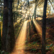 Sunbeams through foggy misty Autumn forest landscape at dawn — Stock Photo
