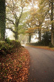 Road winding through foggy misty Autumn forest landscape at dawn — Stock Photo