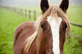 Abstract close up portrait of horse in Autumn field — Stock Photo