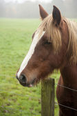 Beautiful portrait of horse in foggy field — Stock Photo