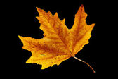 Autumn leaf. — Stock Photo