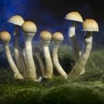 Magic Mushroom — Stock Photo #7756948
