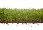 Grass dewdrops — Stock Photo