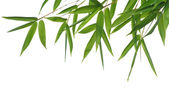 Bamboo- leaves — Stock Photo