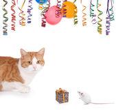Katt och råtta part — Stockfoto