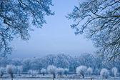 Cold — Stock Photo