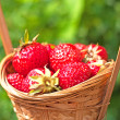 Fresh strawberries in a basket — Stock Photo