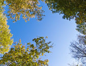 Tree canopy — Stockfoto