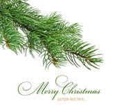 Branch of Christmas tree — 图库照片
