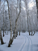 Path to the snow-covered winter forest — Stock Photo