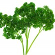Juicy green parsley, isolated on a white background — 图库照片