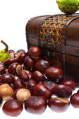 Chestnuts in the chest and about on a white background — Stock Photo
