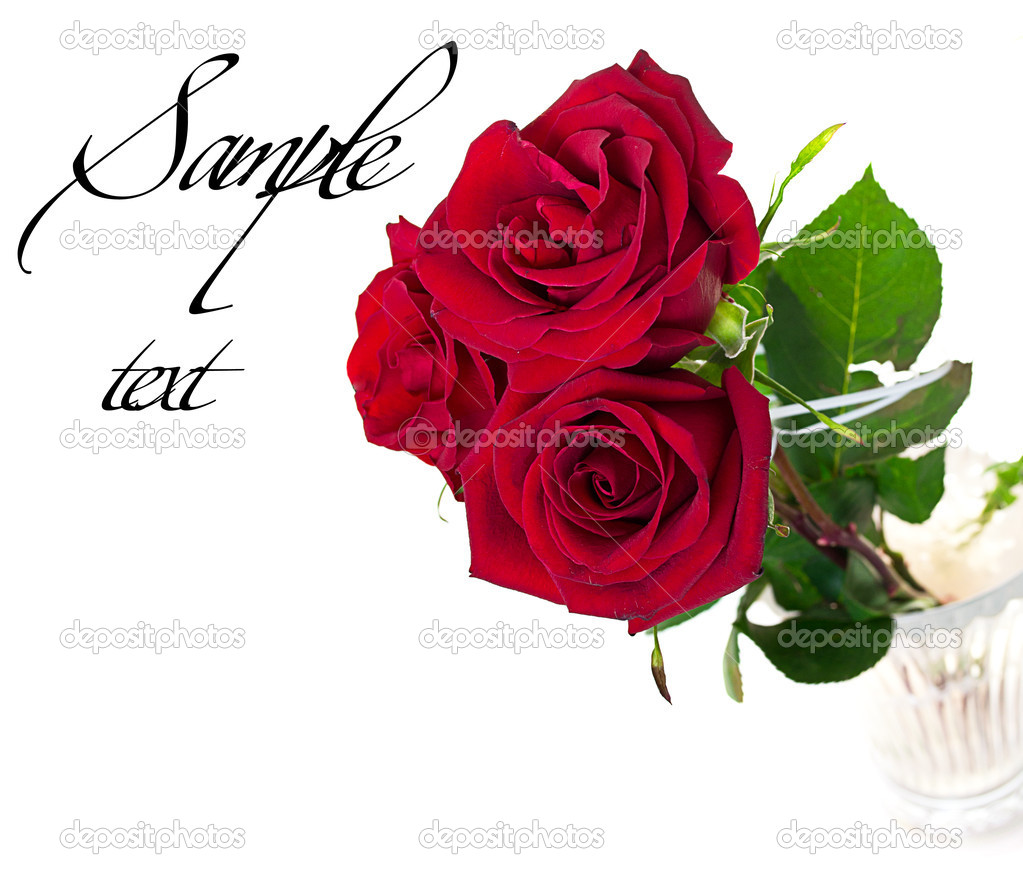 A beautiful bouquet of three red roses with sample text  Stock Photo #7393527