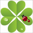Stock Photo: Vector clover leaf with ladybird.