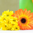The orange Gerbera and yellow Daisy — Foto de Stock