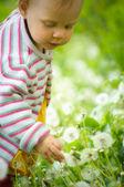 Un ritratto di un bambino piccolo carino nell'erba — Foto Stock
