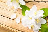 Kiraz ağacı çiçeği — Stok fotoğraf