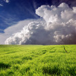 Green field and white clouds — Stock Photo