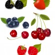 Group of berries and cherries. — Stock Vector