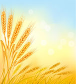 Background with ripe yellow wheat ears, agricultural vector illustration — Stock Vector