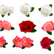 Set of a beautiful roses on a white background. Vector. — Stock Vector