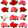 Set of a beautiful roses on a white background. Vector. — Stock Vector #7792125