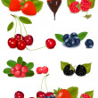 Group of berries and cherries. — Stock Vector #7836350