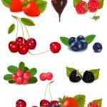 Group of berries and cherries. — Stock Vector