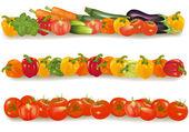Vegetable design borders isolated on white. Vector. — Stock Vector
