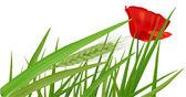 Red poppy green grass. Vector — Stock Vector