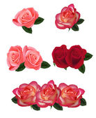 Group of a beauty roses — Stock Vector