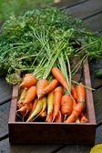 Cenouras orgânicas — Fotografia Stock