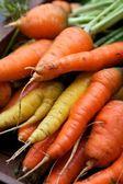 Organic carrots — Stock Photo