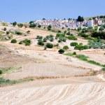 农业领域和在西西里岛的老天主教坟场 — 图库照片