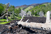 Hardened lava flow on green slope of Etna, Sicily — Stock Photo