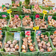 Tulip bulbs sales on street market — Stock Photo