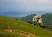 喀尔巴阡山 — 图库照片