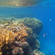 colorful coral reef — Stock Photo #6839931