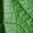 Stock Photo: Green leaf structure