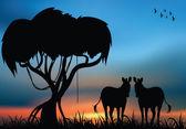 Zebras in the African savanna — Stock fotografie