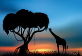 Giraffe at the sunset — Stock Photo