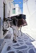 Donkey in the narrow road — Stock Photo