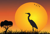 Heron in the african savanna at the sunrise — Stock Photo