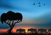 African savanna — Stock Photo