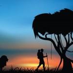 ������, ������: African savanna
