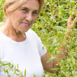 Old woman at plants - Stock Photo